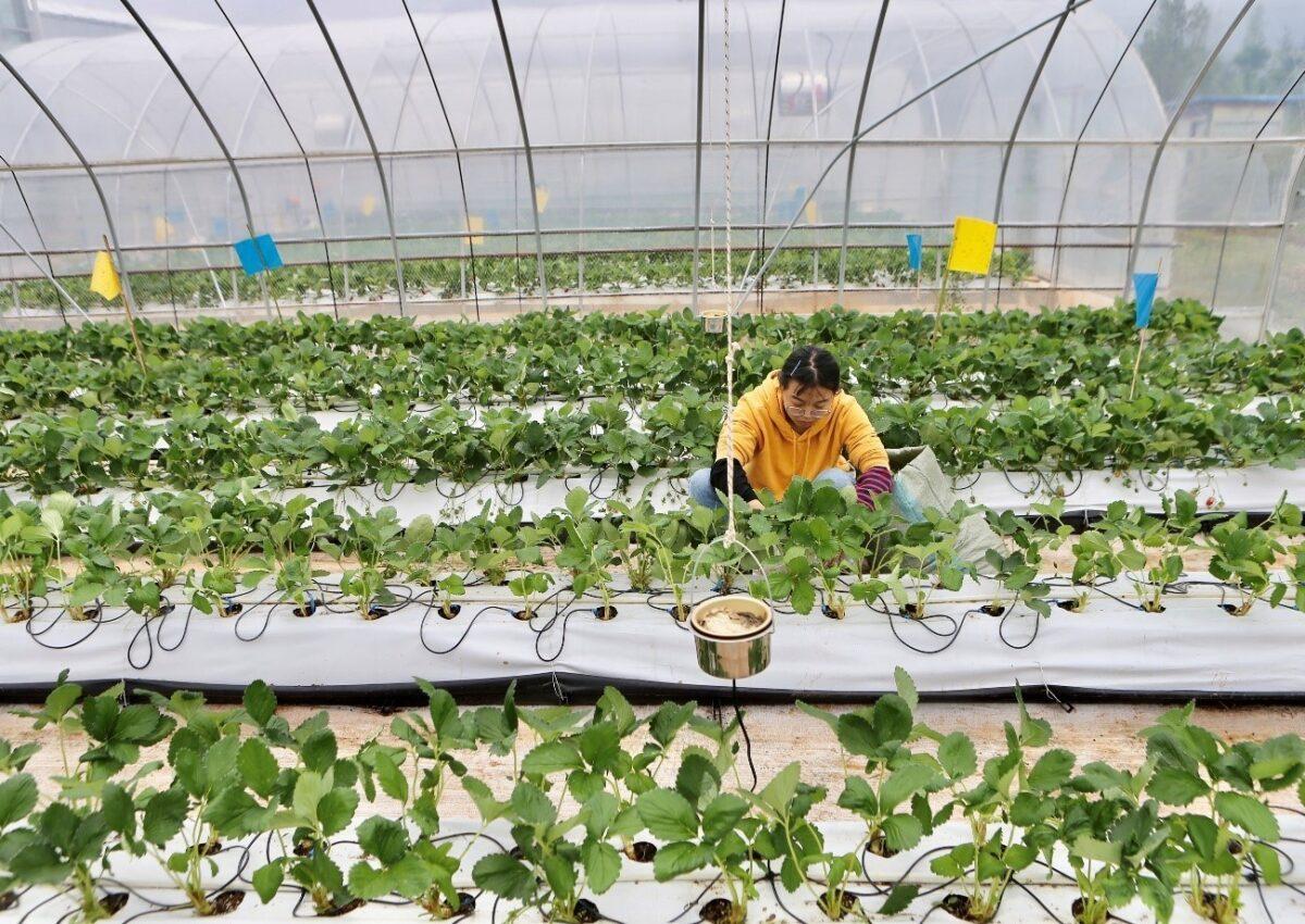 agricultura familiar mercosur